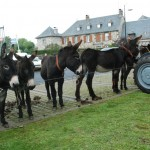 La foire aux ânes en Aveyron.